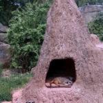 Zoo Leipzig - Erdmännchen